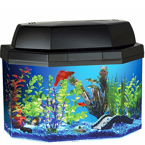 Gold fish in small acuriam best fish for small aquarium for Good fish for small tanks